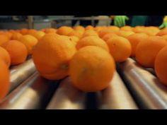 Qui a volé le goût de l'orange ? LE DOC DU DIMANCHE 12/01/2020 Orange, Healthy Fruits, Drop Weight Fast, Vitamin E, Sunday, Program Management