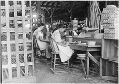 Girl Working in Box Factory, 1909