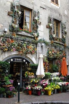 パリの街角にあるお花屋さんです。壁面からつりさげたドライフラワーと店先に並ぶ生のお花のディスプレイがとても美しくて思わず引き寄せられてしまいますね。