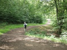 epping forest london - Cerca con Google Epping Forest, Beautiful Scenery, Country Roads, London, Google, Big Ben London