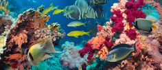 scuba diving adventures coral reefs | Colorful underwater offshore rocky reef with coral and sponges and ...