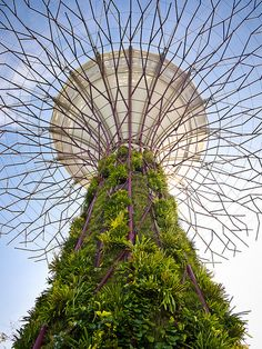 """Another photo of a """"supertree"""" in Singapore's Gardens by the Bay. Photo shot using a Panasonic Lumix pancake lens. See where this picture was taken. Singapore Garden, Gardens By The Bay, Organic Gardening, Container Gardening, Philippines, The Good Place, Fair Grounds, Around The Worlds, Photoshoot"""