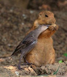 squirrel and wild bird sharing a snack - unusual friends