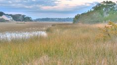 Oak Island salt marsh