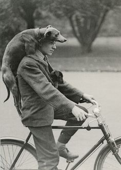 a man in his bicycle with his traveller-dog hat