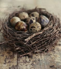 """I collect nests in my home (real ones and """"made by me"""") they tell about """"wrapping in beauty"""" and sweet shelters...self made !"""