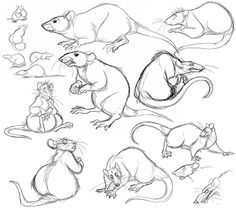 Rat Drawing Reference and Sketches for Artists Animal Sketches, Animal Drawings, Art Drawings, Gesture Drawing, Anatomy Drawing, Nature Sketch, Human Figure Drawing, Art Studies, Animal Design