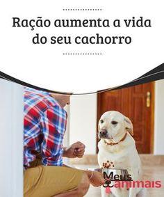 Ração aumenta a vida do seu cachorro Decidir que #tipo de #alimento dar a seu #animal de estimação é bastante #importante. #ALIMENTAÇÃO