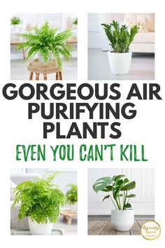 Plants Indoor, Indoor Gardening, Hanging Plants, Gardening Tips, Herb Garden, Lawn And Garden, Container Plants, Container Gardening, Easy Care Plants