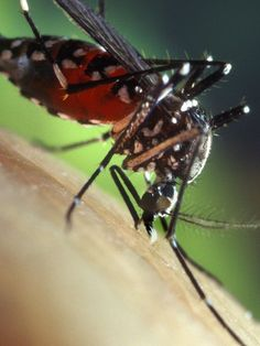 They need some #ParaKito gel! Mid-#Michigan #mosquito attack likely to last 2 weeks!!!