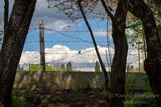 Wire fence and bird