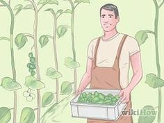 How to Become a Farmer Without Experience