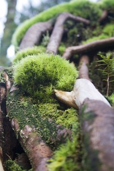 it keeps the faeries from sliding down the tree roots and hurting… Photographie Macro Nature, Foto Macro, Moss Garden, Tree Roots, Walk In The Woods, Belleza Natural, Natural World, Botany, Mother Earth