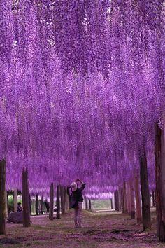 La théorie du tout: Quand le paysage s'orne de violet (en 5 photos)