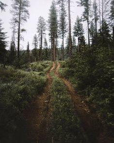 hike in the woods Landscape Photography, Nature Photography, Travel Photography, Nature Sauvage, Nature Aesthetic, All Nature, Beautiful Landscapes, The Great Outdoors, Wonders Of The World
