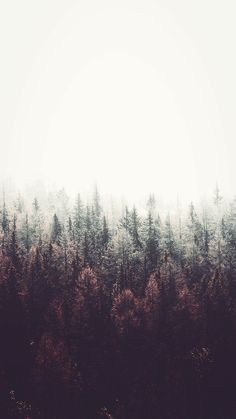Forest Wallpaper The post Forest Wallpaper appeared first on hintergrundbilder. Tumblr Wallpaper, 7 Plus Wallpaper, Nature Wallpaper, Wallpaper Backgrounds, Iphone Wallpapers, Forest Wallpaper Iphone, Wallpaper Lockscreen, Landscape Wallpaper, Wallpaper Quotes