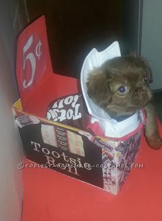 Sweet Chocolate Peekapoo Tootsie Roll Costume... Coolest Halloween Costume Contest