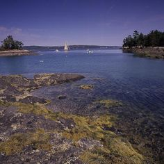 Blue Hill, Maine. Dramatic high tides transform Blue Hill's quiet inlets twice daily. | Coastalliving.com