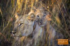 Lioness with Cub - South Africa — earthXplorer adventure travel photography