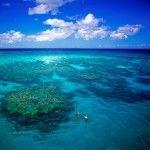 Snorkellers Great Barrier Reef - Lizard Island