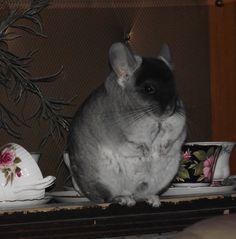 Chubby chin