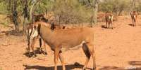 Amazing African Game Reserve for sale! Added more photos. Water Resources, Game Reserve, Types Of Soil, Zebras, Rocky Mountains, More Photos, Wildlife, African, Horses