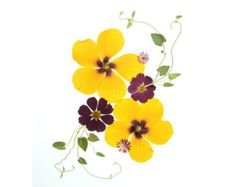 Set of 6 Pressed Flower Cards - Hibiscus - Made in Vermont - #051
