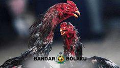 11 Ide Ayam Di 2021 Ayam Ayam Jantan Kandang Ayam