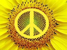 SUNFLOWER....PEACE....PARTAGE OF MP