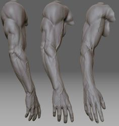 Examples of veins in the arms. #anatomy