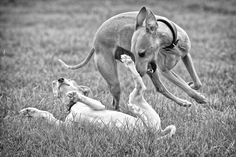 Woof & Tumble by Hot Dog Photography, via 500px.