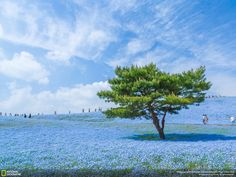 Hiroki Kondo - The Blue Universe