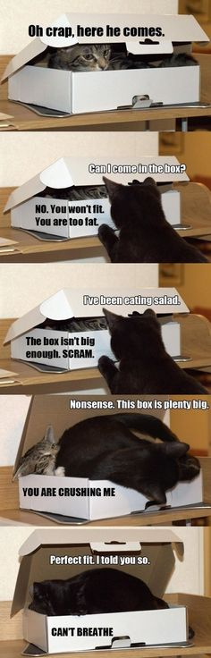 Two cats and a box // I don't know why but this made me think of us @Jose Gutierrez Gutierrez Gutierrez Gutierrez Daniel | See more about black cats, cats humor and cats.