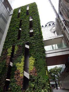 The Heeren Mall in Singapore by Kienta #VerticalGarden #LivingWall #GreenWall