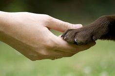 Cumprimentar ou beijar a pata de um animal é um gesto mais nobre do que o aperto de mão das pessoas.