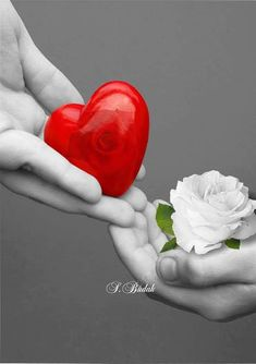 Photo - Google+ Romantic Gif, Romantic Pictures, Love Pictures, Beautiful Pictures, Red Images, Heart Images, Heart Wallpaper, Wallpaper Quotes, Love Friendship Quotes