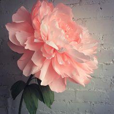 #декордляфотосессии #декорназаказ #фотозона #бумага #paper #peony #paperflower #фотозона #vrn