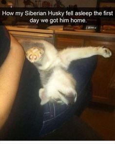 Funny Animals Of The Day 23 Pics
