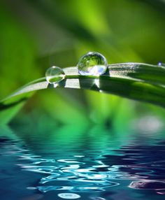 Photo about Green background with grass and water. Image of grass, droplet, fresh - 4606328 Pollution Pictures, Water Pollution, Christian Wallpaper, Psalm 23, Dew Drops, Rain Drops, Water Droplets, Green Backgrounds, Macro Photography