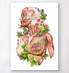 Beautiful male body anatomy art on white background. Unique quirky decor for your home and office. Nice gift for doctors, medical students and nurses. Human Anatomy Art, Body Anatomy, Anatomy Drawing, Medical Illustration, Illustration Art, Molduras Vintage, Nurse Art, Medical Art, Art Sketchbook