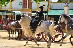 Visit the spring horse fair in Jerez in May We offer tailor made packages to the Jerez Feria in Spain with special trips to the Royal Riding School, a Bodega and horse riding lessons on well schooled Andalucian horses Traditional Spanish Music, Horse Caballo, Horse Dance, Riding Holiday, Easy Jet, Riding School, Spain Holidays, Riding Lessons, Day Book