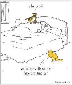 Cats......they think you're dead if you don't respond to their meows for food! Lol!