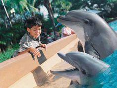 Encontro com golfinhos no #SeaWorldOrlando, uma experiência única!