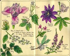 Sketching in Nature: May flowers