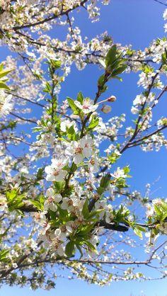 spring♥