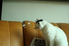 A cat looking confused towards a bubble.