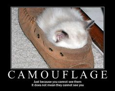 Random Funny Quotes Humor   Funny Cat Pictures - animal-humor Photo