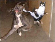 Karatekat