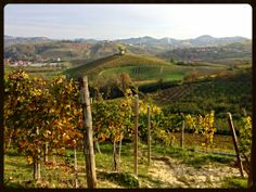 Roero landscape with vineyards and rolling green hills. Piemonte, Italy