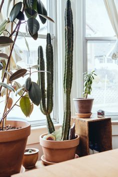 14 Ways to Add Texture and Color to a Room with Cacti | Design*Sponge